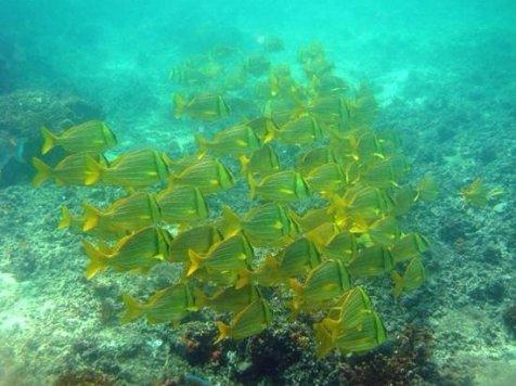 isla-iguana-diving