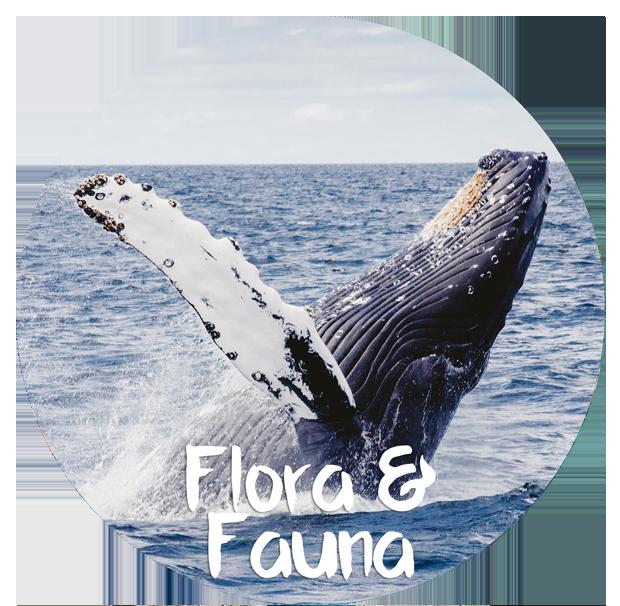 flora-a-fauna-LIGERO